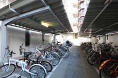 マンションの自転車置き場の様子。(2011-08-08,共用部,GARAGE,1F)