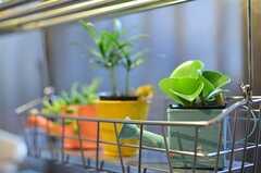 キッチン窓前には、グリーンがたくさん。(2012-12-18,共用部,KITCHEN,1F)