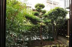 庭の様子。(101号室)(2012-12-18,専有部,ROOM,1F)