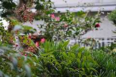 緑を感じられます。(101号室)(2012-12-18,専有部,ROOM,1F)