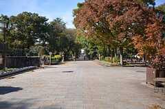 住吉公園の中には参道もあります。(2015-11-16,共用部,ENVIRONMENT,1F)