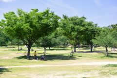 八幡屋公園の様子2。とても気持ちのいい公園です。(2019-05-15,共用部,ENVIRONMENT,1F)
