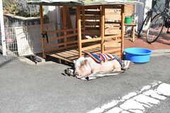 シェアハウス周辺の様子2。看板犬ならぬ、看板ブタがいます!(2018-02-14,共用部,ENVIRONMENT,1F)