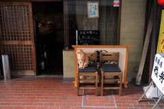 近所の猫。(2010-11-26,共用部,ENVIRONMENT,1F)
