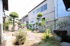 庭の様子。建物の表側と裏側に1箇所ずつあります。(2013-08-22,共用部,OTHER,1F)