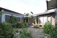 庭の様子2。(2013-08-22,共用部,OTHER,1F)