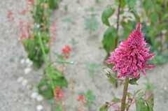 植物の種類も色々。(2013-08-22,共用部,OTHER,1F)