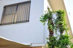 エントランス脇の松の木は、前オーナーさんが子供のころに植えられたものなのだとか。(2012-09-13,共用部,OTHER,1F)