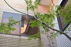 紅葉は2階の窓からも楽しめます。(2014-10-16,共用部,OTHER,1F)