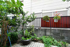玄関前は植物がいっぱい。(2017-07-20,周辺環境,ENTRANCE,1F)