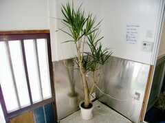 玄関脇に置かれた植物(A棟・1F)(2007-03-22,共用部,OTHER,1F)