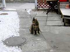 メイプルハウスの共用猫(?)、Brownie。慣れてるからか、英語っぽく呼掛けると反応良し。(2007-03-22,共用部,OTHER,1F)