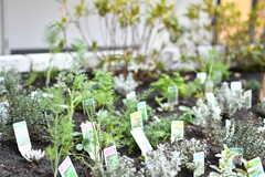 中庭の花壇ではハーブが育っています。(2020-02-02,共用部,OTHER,1F)