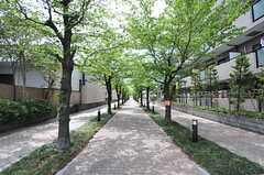 桜並木もすぐ近く。(2013-04-18,共用部,ENVIRONMENT,1F)