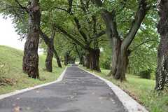 家の目の前にある、桜並木の遊歩道。(2015-08-18,共用部,ENVIRONMENT,1F)