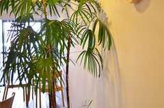 グリーンの様子。(2012-01-07,共用部,LIVINGROOM,1F)