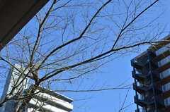 春になれば葉も茂ります。(2014-03-11,共用部,OTHER,1F)
