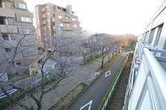 ベランダから見た緑道の様子。桜並木で、春には凄い眺めなのだそう。(421号室)(2015-01-08,専有部,ROOM,4F)