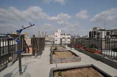 屋上菜園があります。(2013-04-16,共用部,OTHER,5F)