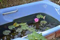 よく見るとバスタブ、な池。(2014-11-09,共用部,OTHER,1F)