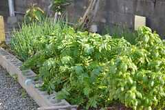 庭では菜園が広がっています。(2014-11-09,共用部,OTHER,1F)