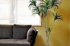 ソファの脇のグリーンの様子。(2011-10-06,共用部,LIVINGROOM,2F)