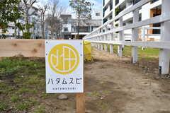 シェア菜園はハタムスビの名称が付いています。(2020-03-17,共用部,OTHER,1F)