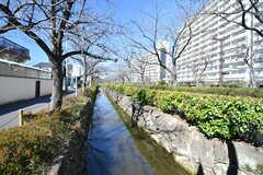 団地の目の前には、小さな川が流れています。春になると桜並木が綺麗です。(2020-03-06,共用部,ENVIRONMENT,1F)