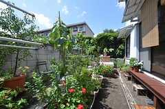 庭の様子3。(2014-08-11,共用部,OTHER,1F)