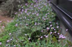 小さな花が風に吹かれています。(2012-05-14,共用部,OTHER,1F)