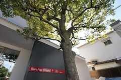 玄関前のシンボルツリーの様子。(2011-08-30,周辺環境,ENTRANCE,1F)