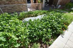 畑の様子2。夏は枝豆を育てていました。(2016-08-25,共用部,OTHER,1F)