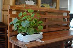 ベンチにはこれから植える苗がスタンバイ中。(2017-06-12,共用部,LIVINGROOM,1F)