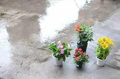 ポッドに植えられた花が置かれています。(2014-06-12,共用部,OTHER,7F)
