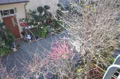 梅の花が咲いている。(2009-03-02,共用部,OTHER,2F)