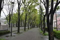日暮里・舎人ライナー、熊野前駅からシェアハウスまでの道のりにある緑道の様子。(2012-04-27,共用部,ENVIRONMENT,1F)