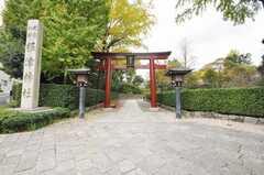 根津神社の様子。(2009-11-12,共用部,ENVIRONMENT,1F)