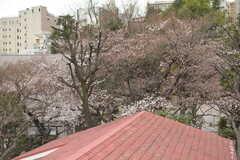 裏手の公園では、あとすこしで桜が開花。(2018-03-19,共用部,OTHER,4F)