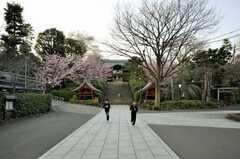 護国寺の参道。(2010-03-16,共用部,ENVIRONMENT,1F)