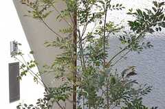 玄関にはオリーブの木が植えられています。(2015-03-24,周辺環境,ENTRANCE,1F)