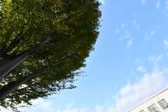 大きなシンボルツリー。(2017-11-10,共用部,OTHER,1F)