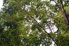 頭上まで植物に覆われています。(2015-06-11,共用部,OTHER,1F)