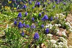 花も咲いています。(2012-02-10,共用部,OTHER,4F)