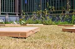 芝生には杉板が置かれています。(2012-02-10,共用部,OTHER,4F)