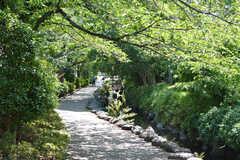 駅とのあいだにある川沿いの緑道。とても気持ちがいいです。(2021-06-01,共用部,ENVIRONMENT,1F)