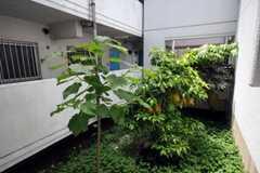 マンションの庭にはきれいな緑が。(2010-05-13,共用部,OTHER,1F)