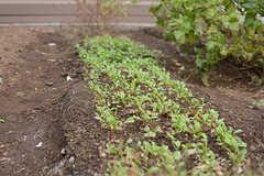 部屋ごとに畝が割り振られていて、好きな野菜や植物を育てられます。(2017-11-14,共用部,OTHER,1F)