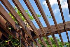 蔦が絡みついたテラス。組まれた木材もいい色になって来ました。(2012-08-05,共用部,OTHER,1F)