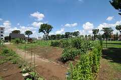敷地内の棟共用の畑の様子。(2012-08-05,共用部,OTHER,1F)