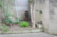 庭の片隅にはナゼか鉄アレイ。(2011-09-13,共用部,OTHER,1F)